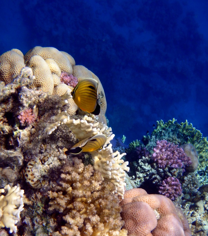 Red Sea Exotic World